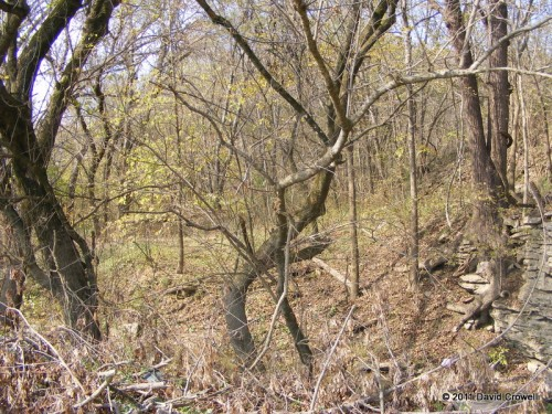 Woods and brush on the other side of the creek