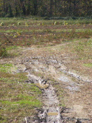 This is the muddy area where I fell